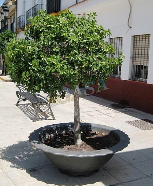 Art culos mobiliario urbano jardineras jardineras de for Jardineras para arboles grandes